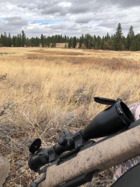 Hog hunting in Eastern Washington